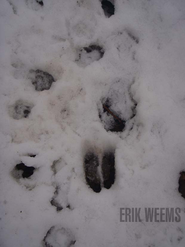 ANimal Tracks in teh Snow Washington DC