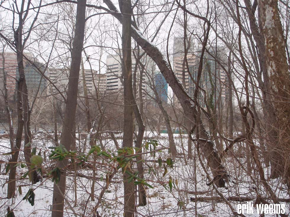 SNow on Roosevelt Island
