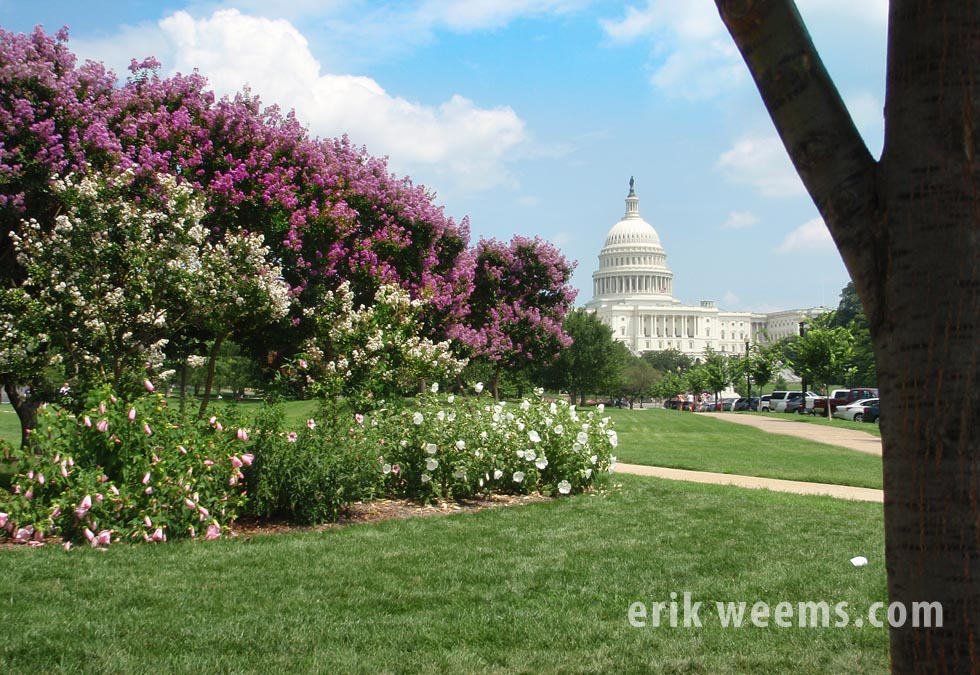 Capitol Hill flower beds and dome Washingon DC