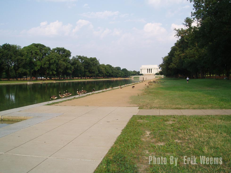 Ducks at the Lincoln Memorial - Washington DC