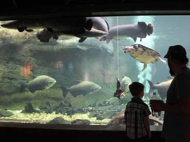 National Zoo In Washington Dc