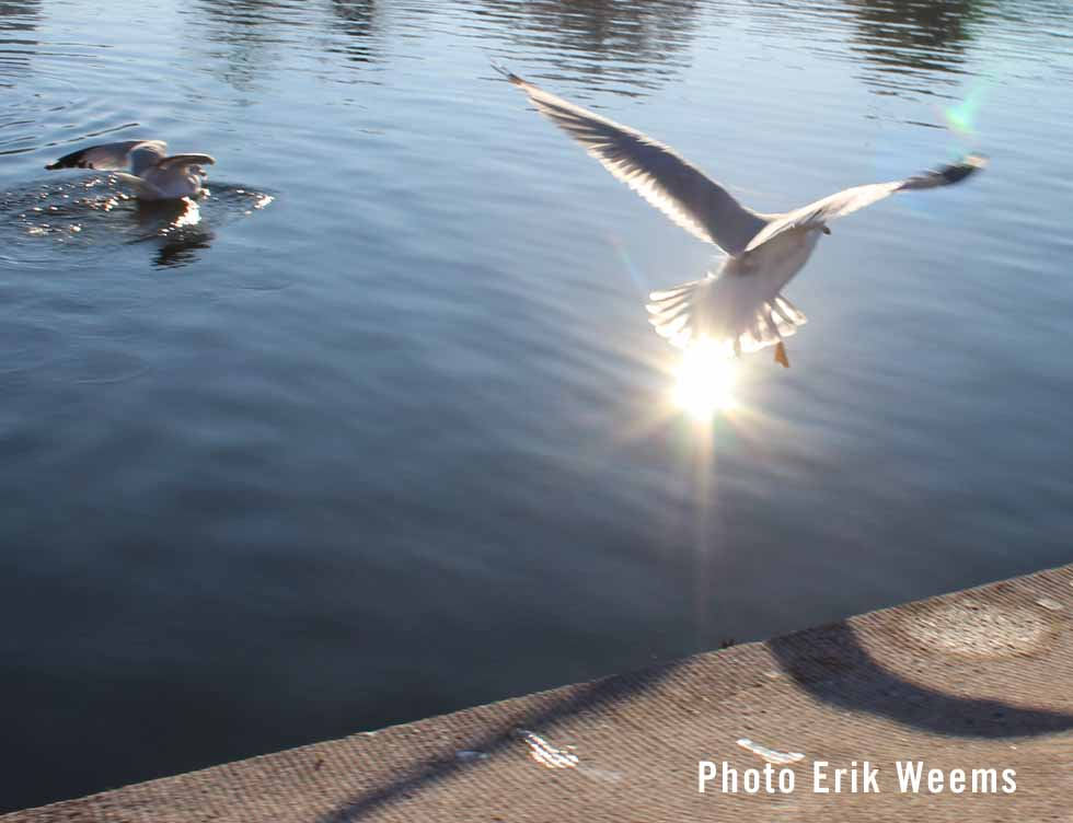 Seagulls Washington DC