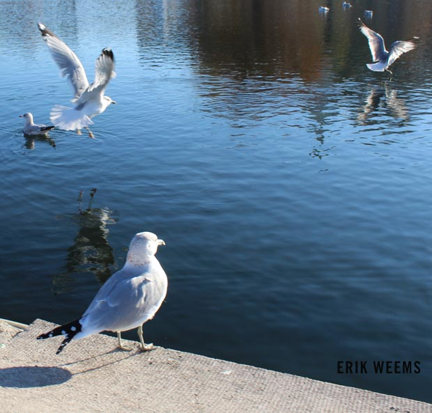 Gulls Washington DC