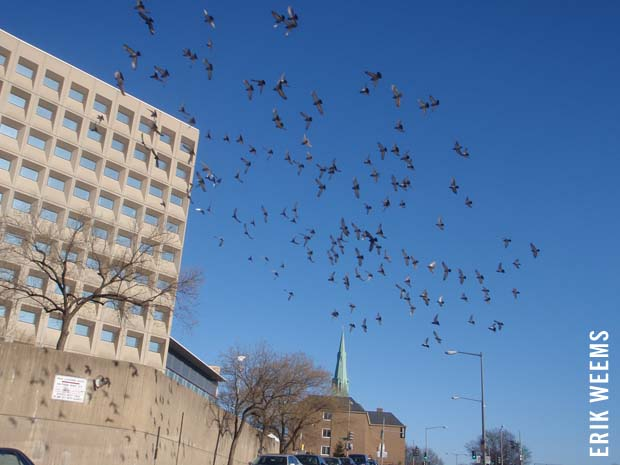 Birds over DC Winter